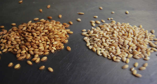 Hulled-and-Pearled-Barley