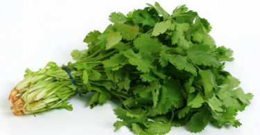 How Are Cilantro And Weight Loss Connected?