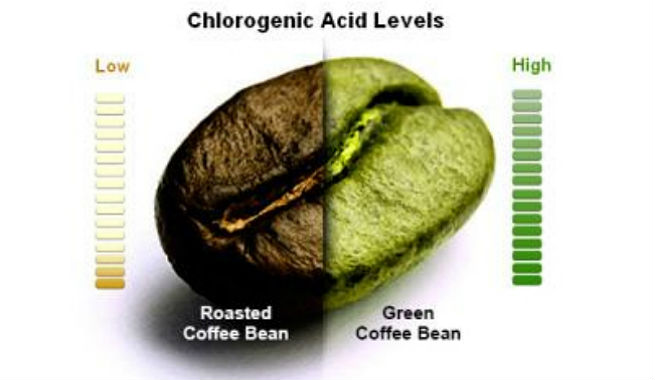 Does Green Coffee Bean Really Work For Weight Loss?