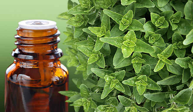 Oregano Oil – A Natural, Safe And Effective Acne Treatment